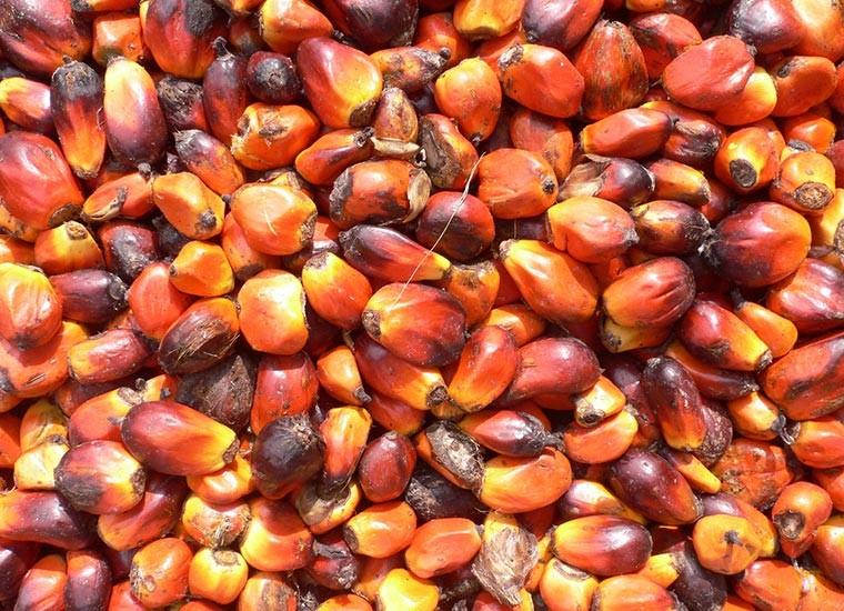 L'olio di palma fa male?