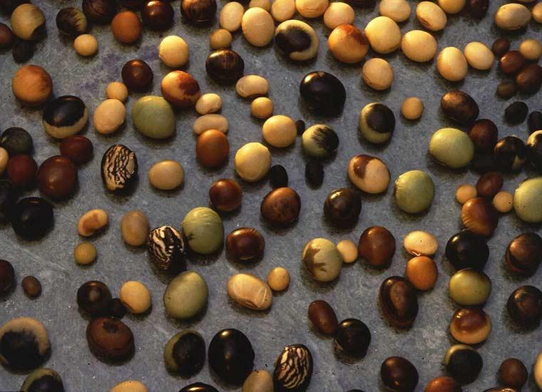 Olio e semi di soia