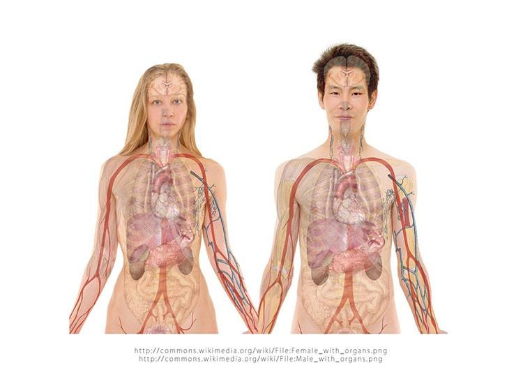 Cisti renali: cosa sono, i sintomi e come si curano