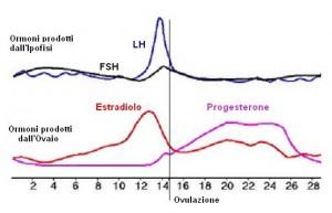estradiolo ciclo mestruale