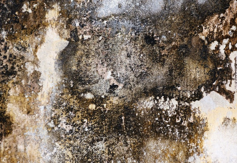 Rimedi naturali per eliminare la muffa dai muri