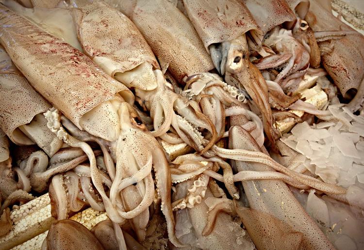 I calamari: quali sono i valori nutrizionali e le calorie di questo alimento