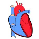 cuore-valvola