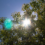 foglie-canfora