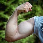 braccio-muscoloso