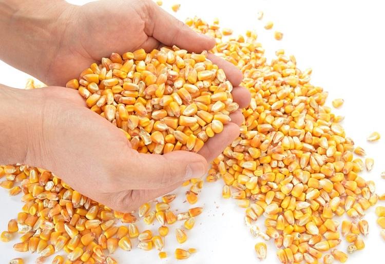 Gallette di mais, valori nutrizionali e calorie