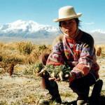 La Maca peruviana, proprietà e controindicazioni