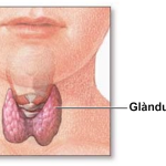 Tiroide ingrossata, cause e cura
