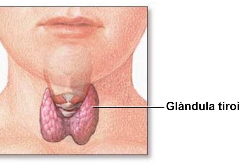 sintomi della tiroide ingrossata