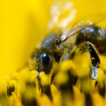 polline-api