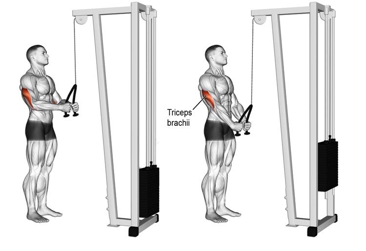 Il Push Down, come si esegue l'esercizio