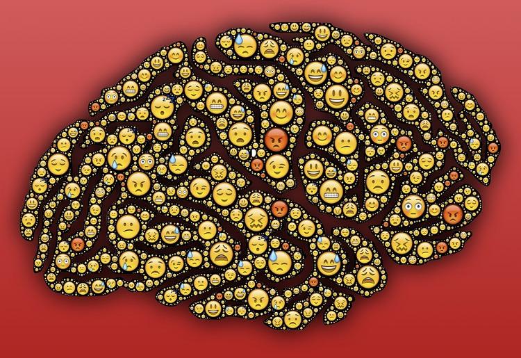 Sistema limbico, cos'è e fisiologia