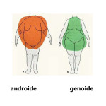 _genoide-androide