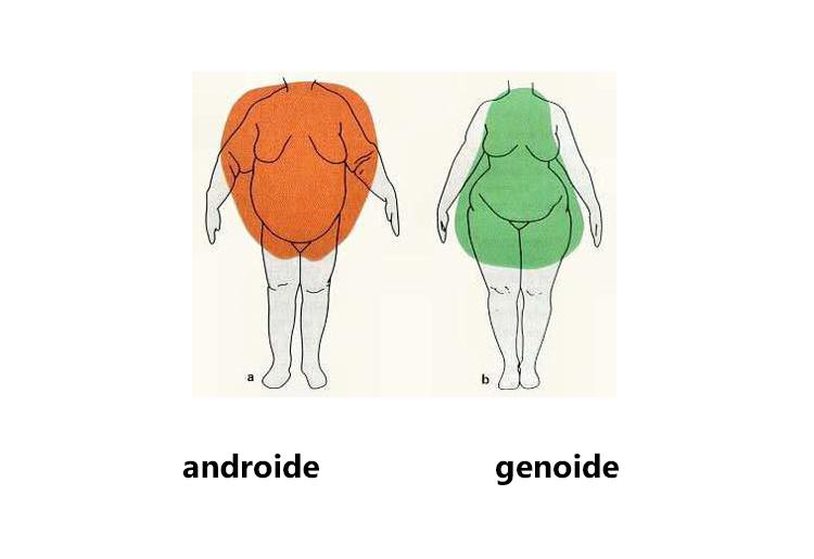 Androide opposto a ginoide, cosa sono e suggerimenti